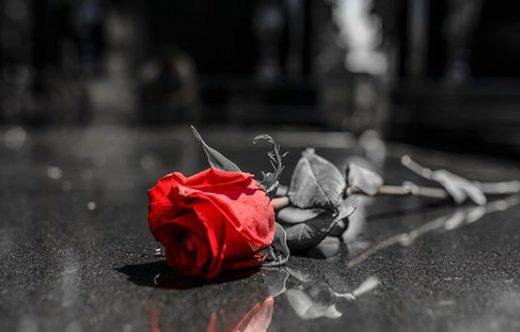 Rose Sur Sepulture Min